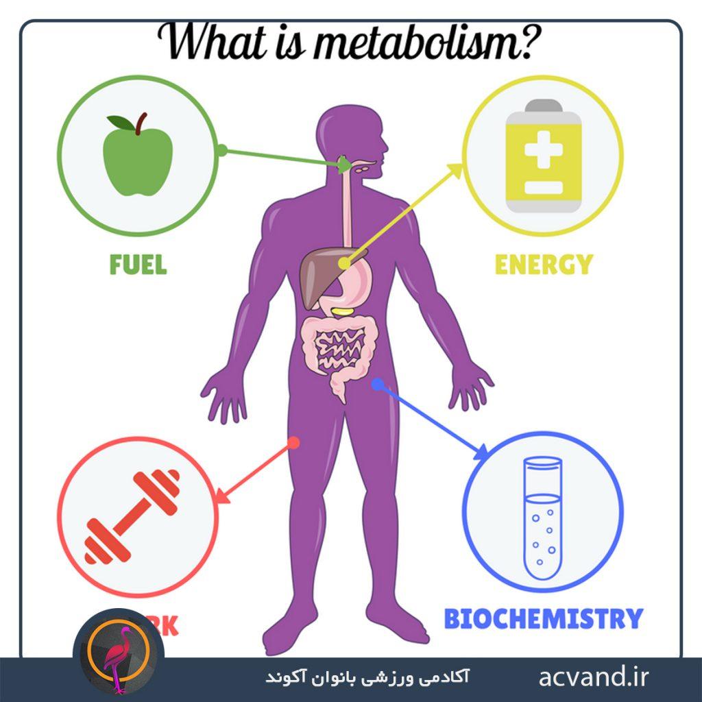 متابولیسم چیست؟