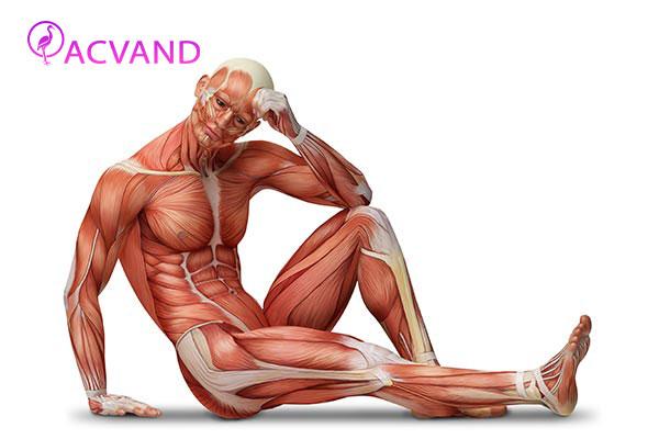 نقش ورزش در عضلات بدن